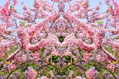 春色滿園 花旗木:DSC_0296_調整大小.JPG