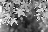 台北 奧萬大 槭紅:DSC_0030_調整大小.JPG