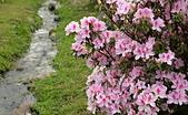 陽明山 櫻花+1:DSC_0107_調整大小.JPG