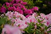 陽明山 櫻花+1:DSC_0068_調整大小.JPG