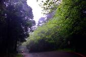 紫籐霧雨:DSC_6038_調整大小.JPG