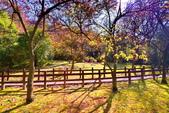 櫻你而在 陽明山公園:DSC_0451_調整大小.JPG