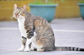 成豐夢幻世界6-12貓:_DSC0125.JPG