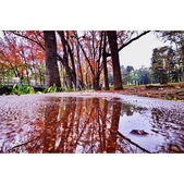 雨後的公園:相簿封面