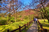 櫻你而在 陽明山公園:DSC_0468_調整大小.JPG