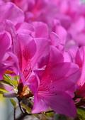 台大杜鵑花節2021:DSC_9459_調整大小.JPG