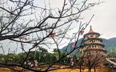 2019 三芝 天元宮: