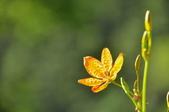 成豐夢幻世界6-12動植物:_DSC0067.JPG