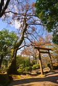 櫻你而在 陽明山公園:DSC_0475_調整大小.JPG