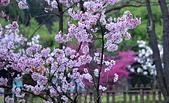陽明山 櫻花+1:DSC_0288_調整大小.JPG