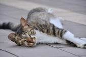 成豐夢幻世界6-12貓:_DSC0129.JPG