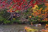 雨中 湯湖:DSC_0618_調整大小.JPG