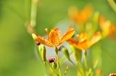 成豐夢幻世界6-12動植物:_DSC0068.JPG