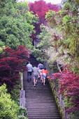 槭紅太平山:DSC_2343_調整大小.JPG
