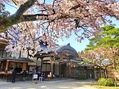 日本 平成時期的最後櫻花...2019 4月:344CABD4-9CB6-422E-98DB-148362F07108_調整大小.jpg