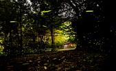 華梵大學 螢火蟲之夜:DSC_0159_調整大小.JPG