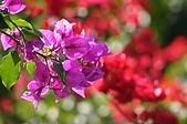 友柏農場-動植物:IMG_0472.JPG