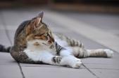 成豐夢幻世界6-12貓:_DSC0135.JPG