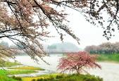弘前公園 櫻花祭 花見:3DFDBFDC-99F3-4386-A804-951E99CA650C_調整大小.jpg