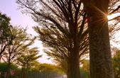學甲欖仁樹:DSC_2276_調整大小.JPG