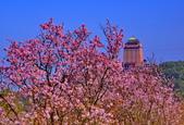 三芝 櫻花:DSC_0055_調整大小.JPG