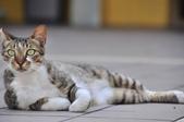 成豐夢幻世界6-12貓:_DSC0138.JPG