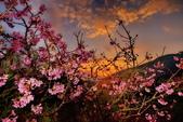 夜幕 陽明山噴泉 賞:DSC_0513_調整大小.JPG