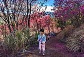 白毛台山  櫻花:IMG_20210213_093552_調整大小.jpg