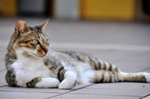 成豐夢幻世界6-12貓:_DSC0139.JPG