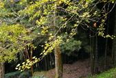 銀杏森林:DSC_0027_調整大小.JPG