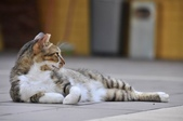 成豐夢幻世界6-12貓:_DSC0141.JPG
