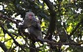 棲蘭森林遊-1:_DSC0052.JPG