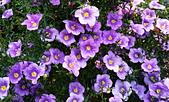 新生公園 玫瑰花:IMG_20210331_174229_調整大小.jpg