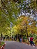 落羽杉季節:IMG_20201213_142126_調整大小.jpg