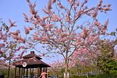 春色滿園 花旗木:DSC_0313_調整大小.JPG