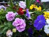 新生公園 玫瑰花:IMG_20210331_175107_調整大小.jpg