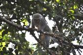 棲蘭森林遊-1:_DSC0053.JPG