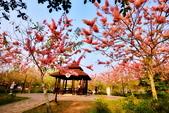 春色滿園 花旗木:DSC_0397_調整大小.JPG