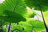 動植物-萬瑞森林12-25:IMG_0205.JPG