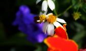 花蟲習拍: