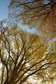 學甲欖仁樹:DSC_2303_調整大小.JPG