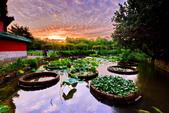 植物園夕彩:DSC_2901_調整大小.JPG