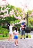 春色滿園 花旗木:DSC_0435_調整大小.JPG