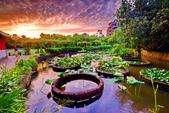 植物園夕彩:DSC_2910_調整大小.JPG
