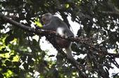 棲蘭森林遊-1:_DSC0054.JPG