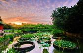 植物園夕彩:DSC_2922_調整大小.JPG