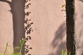 成豐夢幻世界6-12動植物:_DSC0079.JPG