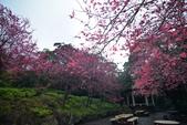 陽明山 後山公園 櫻花:DSC_0208.jpg