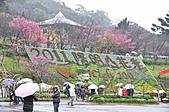 陽明山花季雨中:_DSC0254.JPG