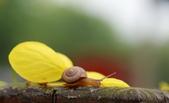 小蝸牛的早晨:DSC_6233_調整大小.JPG